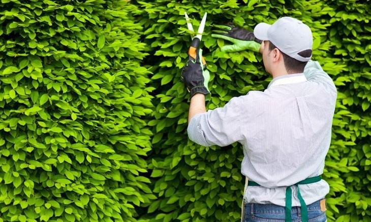 Lựa chọn nhà thầu 14 gói thầu chăm sóc cây xanh tại Đà Nẵng: Xuất hiện tiêu chí hạn chế nhà thầu?
