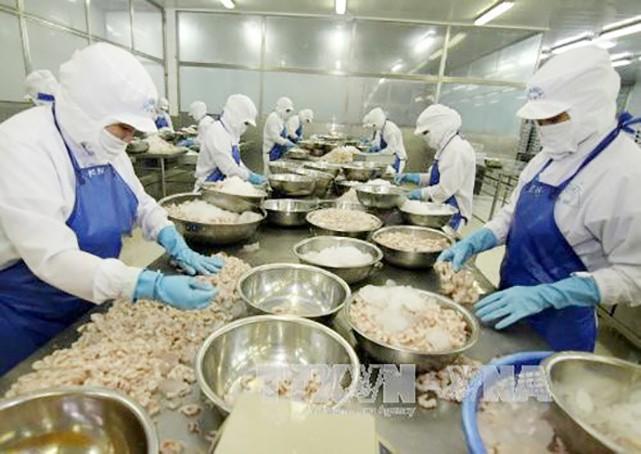 Chế biến tôm đông lạnh xuất khẩu tại Công ty Cổ phần Xuất nhập khẩu tổng hợp Giá Rai, thị xã Giá Rai (Bạc Liêu).