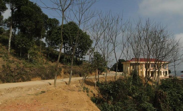 Đấu giá quyền sử dụng đất tại huyện Văn Chấn, Yên Bái