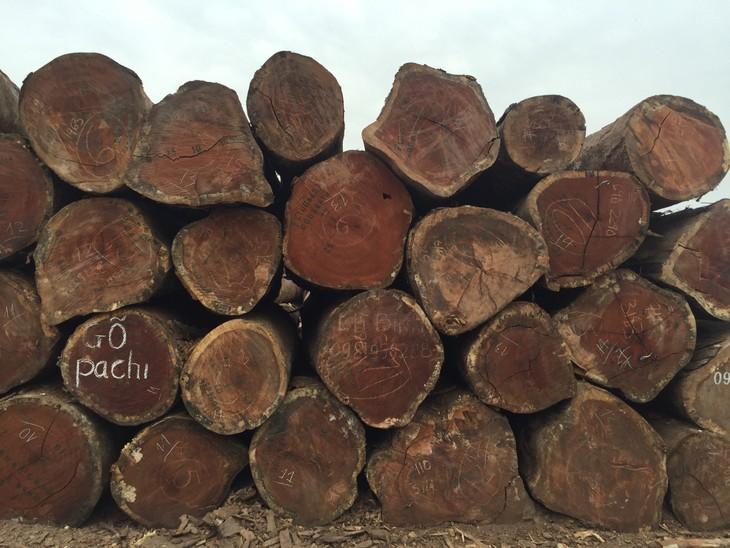 Đấu giá gỗ tròn và gốc rễ nhóm IIA tại tỉnh Kon Tum