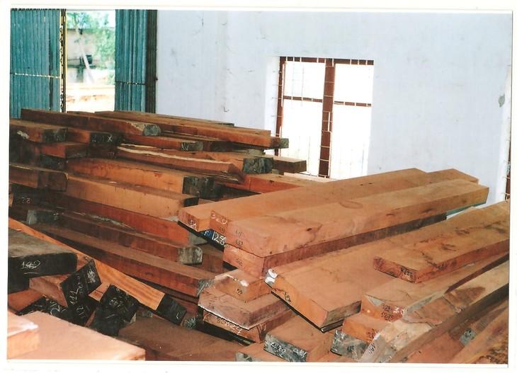 Đấu giá gỗ xẻ và gỗ tròn từ nhóm III đến nhóm VIII tại tỉnh Kon Tum
