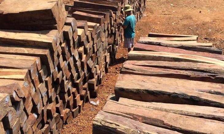 Đấu giá gỗ xẻ nhóm III đến nhóm VI tại tỉnh Kon Tum