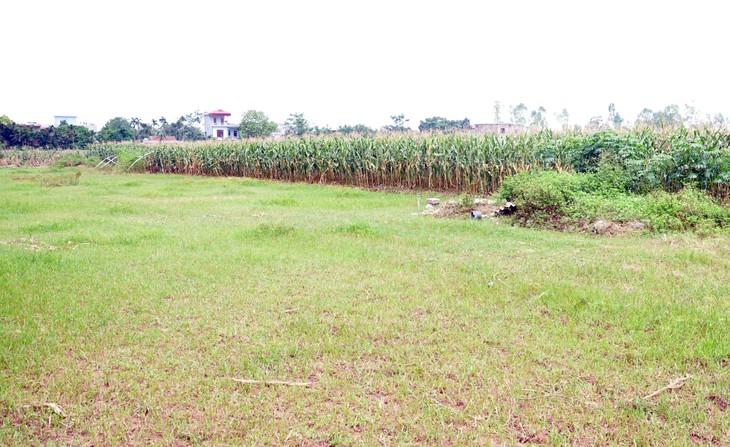 Đấu giá quyền sử dụng đất tại huyện Lý Nhân, Hà Nam