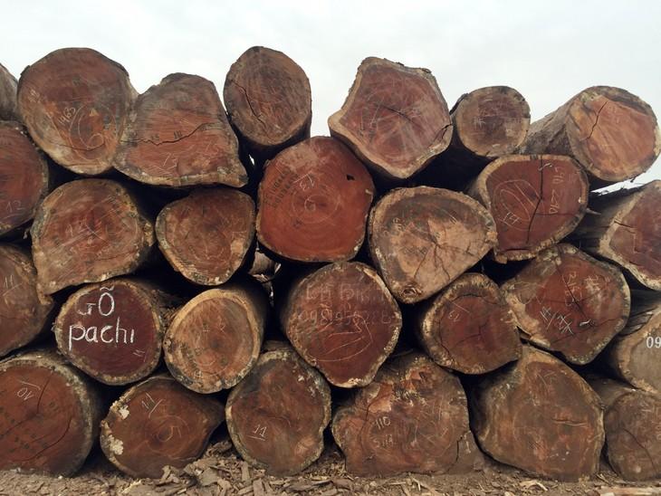 Đấu giá gỗ tròn và gốc rễ nhóm IIA tại TP Kon Tum, Kon Tum