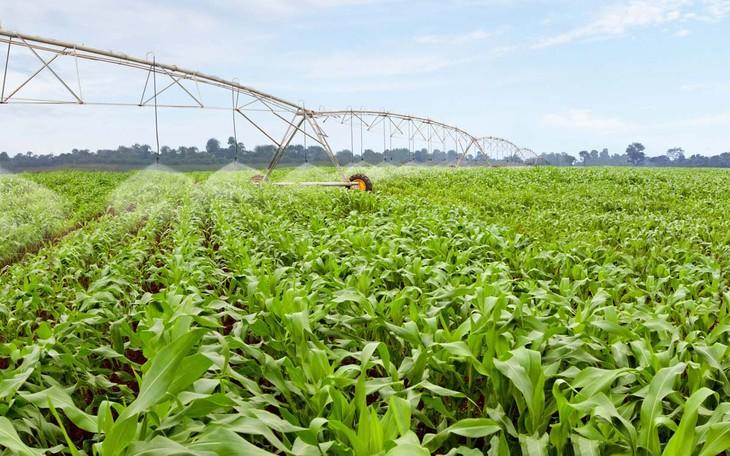 Kiện toàn thể chế để phát triển nền nông nghiệp bền vững