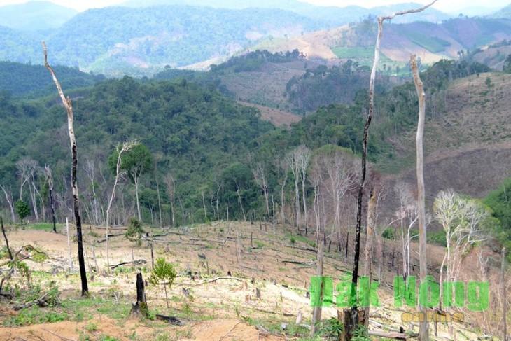 Bắt cựu Giám đốc để mất hàng nghìn ha rừng