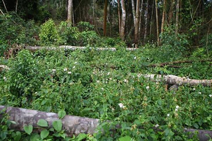 Cơ quan công an sẽ điều tra vụ phá rừng quy mô lớn tại Đắk Nông.
