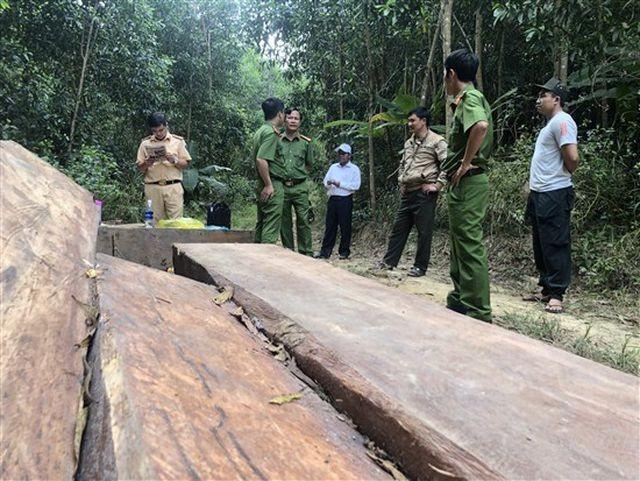 Cơ quan chức năng kiểm đếm số gỗ (ảnh VKSND tỉnh Đắk Lắk)