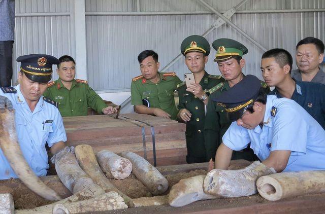 Lực lượng chức năng khám xét lô hàng nghi là ngà voi bọc gỗ để nguỵ trang nhập từ Congo về Cảng Tiên Sa - Đà Nẵng