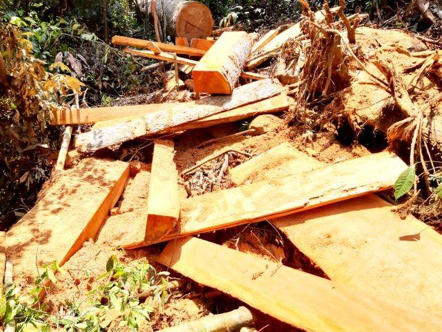Hiện trường vụ phá rừng. Ảnh CTV