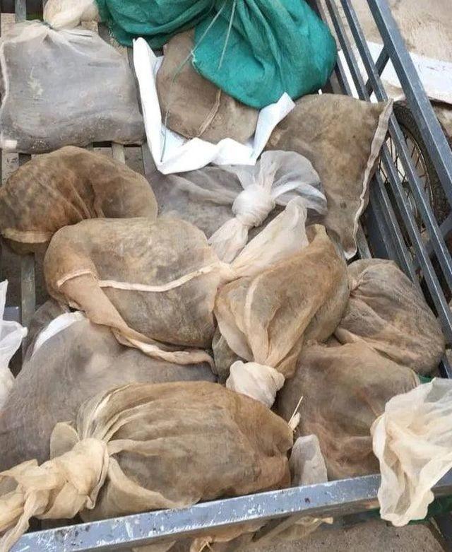 Số động vật hoang dã bị phát hiện, bắt giữ.