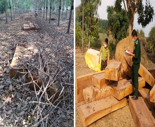 Hiện trường phát hiện vụ tàng trữ gỗ lậu tại huyện Ngọc Hồi