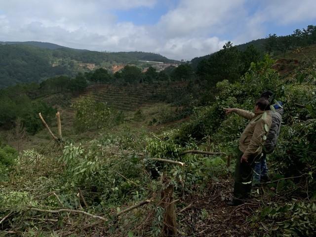 Để xảy ra sai phạm trong quản lý rừng nguyên Giám đốc Sở NN- PTNT tỉnh Lâm Đồng bị khởi tố