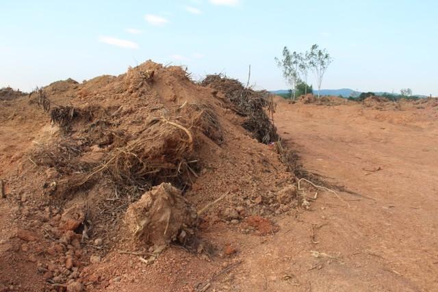 Hàng ngàn m3 đất lâm nghiệp bị khai thác trái phép.