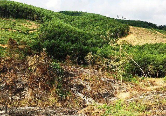 Rừng phòng hộ thuộc BQL rừng phòng hộ Yên Thành (Nghệ An)