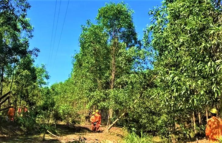 Công nhân Điện lực Diên Khánh - Khánh Vĩnh (PC Khánh Hòa) phát quang hành lang tuyến 35kV huyện Khánh Vĩnh