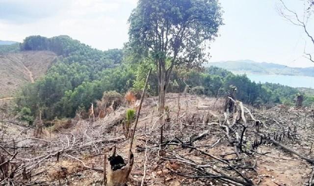 Diện tích rừng đầu nguồn sông Bồ khoảng 2 hecta bị đốt cháy rụi, nhiều cây bị đốn hạ trơ gốc và mang đi khỏi hiện trường