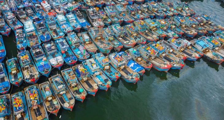 Bộ đội Biên phòng cũng phối hợp với các đơn vị hướng dẫn, sắp xếp tàu thuyền neo đậu an toàn tại Âu thuyền Thọ Quang và vịnh Mân Quang