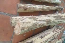 Ngày 6/4/2021, đấu giá 1.550 kg gỗ sưa trắng tại tỉnh Lạng Sơn