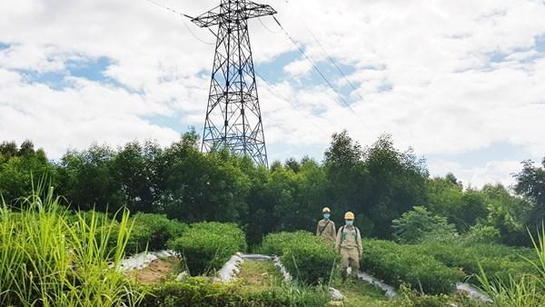 Đội Truyền tải điện Quy Nhơn (TTĐ Bình Định) tuần tra, kiểm tra đường dây 220kV Pleiku2 - Phước An