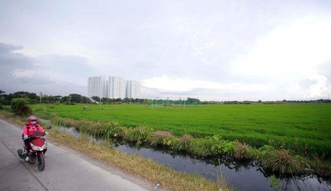 Ban hành chưa được 1 tháng, bảng giá đất nông nghiệp ở TPHCM đã lạc hậu.
