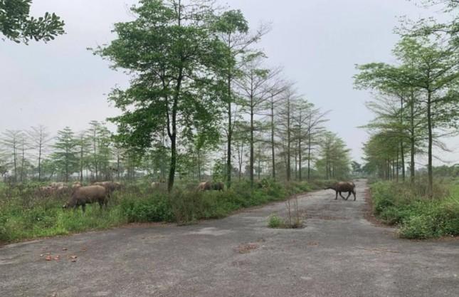 Bộ TN&MT sẽ thanh tra loạt dự án 'treo' ôm đất bỏ hoang