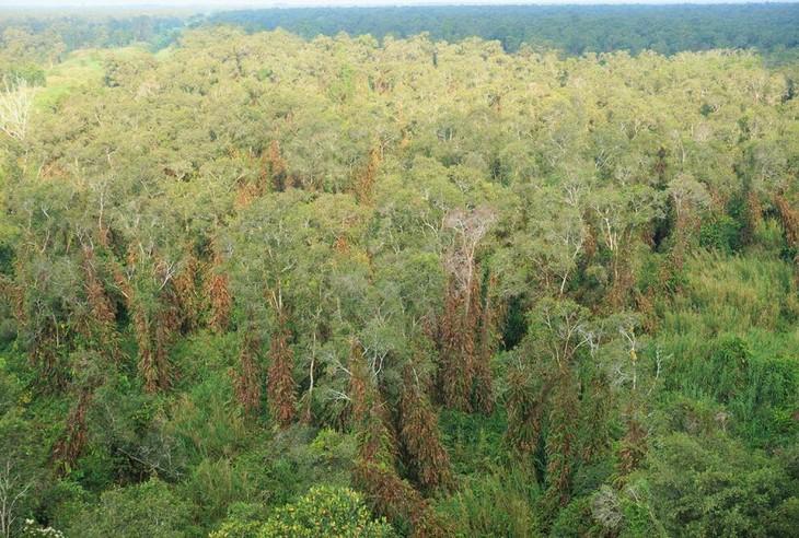 Cà Mau bán đấu giá rừng sản xuất năm 2021 của Công ty Lâm nghiệp U Minh Hạ