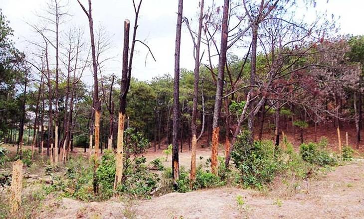Khoảnh rừng khu vực dự án bị tàn phá