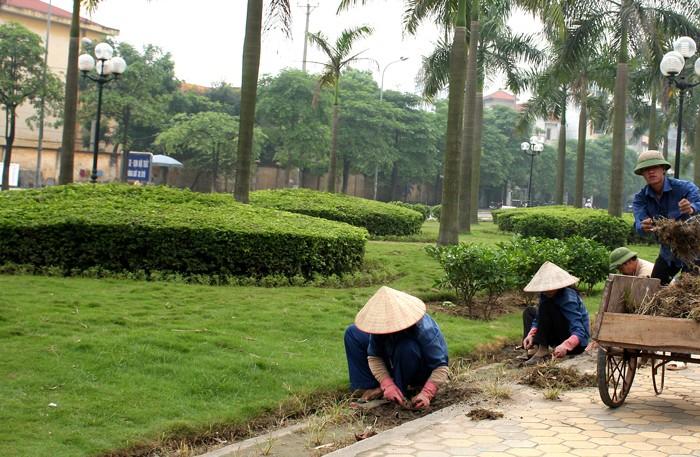 Gói thầu chăm sóc cây xanh, thảm cỏ, nhưng bên mời thầu cài tiêu chí về nhân lực không phù hợp. Ảnh: Tiên Giang