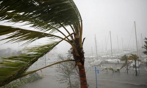 Tàu thuyền neo đậu tại Miami (Florida) hôm qua. Ảnh:Reuters