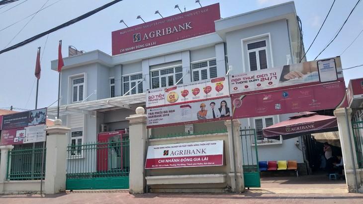 Trong số 5 nhà thầu nộp HSDT, Công ty CP Phát triển Đại Việt đã từng trúng thầu tại Ngân hàng NN&PTNT, Chi nhánh Đông Gia Lai