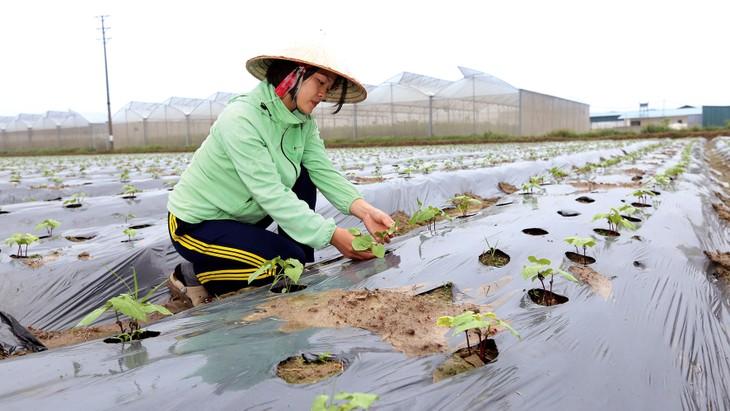 Sản xuất nông nghiệp là một trong những ngành được Chính phủ gia hạn 5 tháng tiền thuế và tiền thuê đất trong năm 2020. Ảnh: Huấn Anh