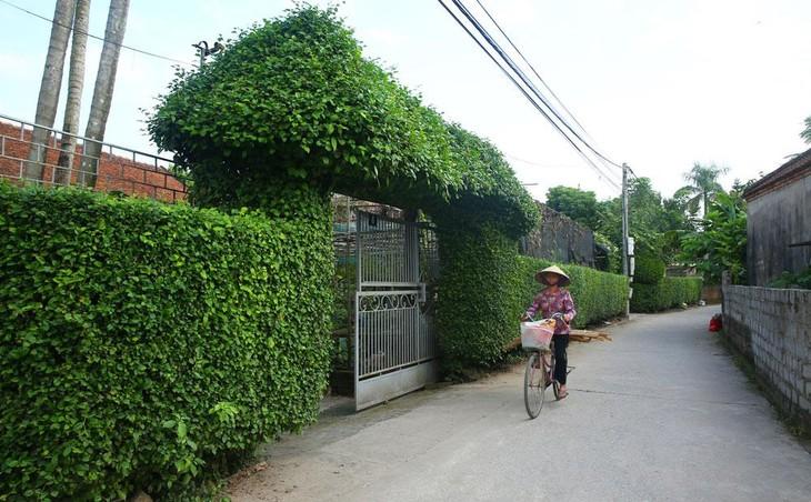 Xây dựng Kim Tiến và các cuộc đối đầu nhẹ nhàng tại Ninh Bình