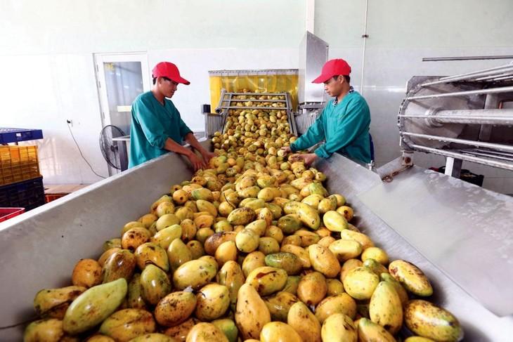 Doanh nghiệp Việt Nam khó tham gia vào các công đoạn mang lại giá trị cao trong chuỗi cung ứng nông nghiệp hay chế biến thực phẩm. Ảnh: Huấn Anh