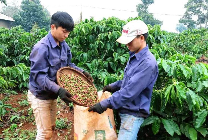 Một số doanh nghiệp nhà nước trong lĩnh vực xi măng, cao su, cà phê và dịch vụ công ích sẽ sử dụng tiêu chí riêng để thực hiện chuyển đổi sở hữu, sắp xếp lại, thoái vốn. Ảnh: Đình Thắng