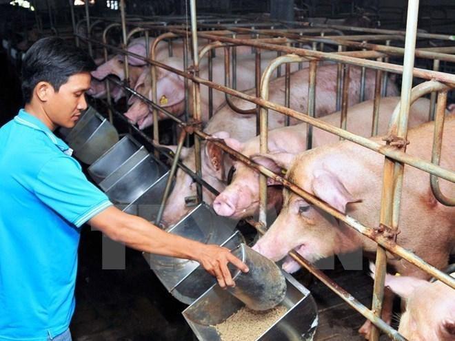 Giá thức ăn chăn nuôi tăng cao khiến nhiều người chăn nuôi điêu đứng. Ảnh: Internet