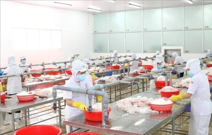 Thực hiện giãn cách trong khu vực chế biến thủy sản tại một doanh nghiệp thủy sản khu vực phía Nam (ảnh: Internet)