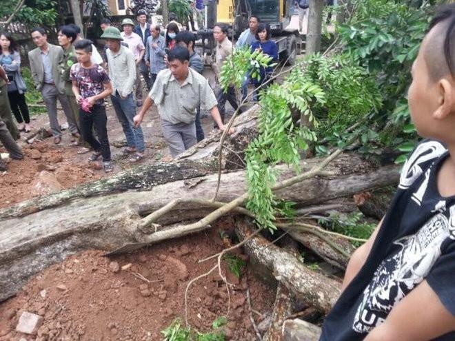 Chặt hạ cây sưa bán đấu giá 24,5 tỷ ở Bắc Ninh ảnh 3