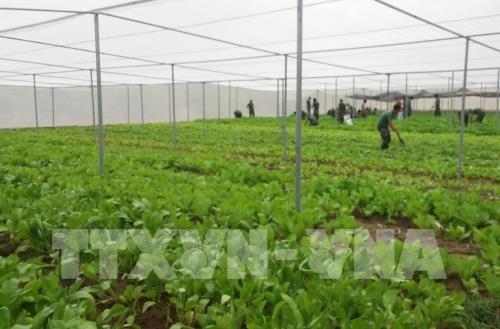 Nông nghiệp công nghệ cao: Xây dựng quan hệ đối tác giữa doanh nghiệp và người dân ảnh 1