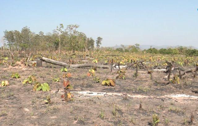 Gia Lai: Phá rừng hơn 7ha làm nương rẫy, một đối tượng bị bắt giữ ảnh 2