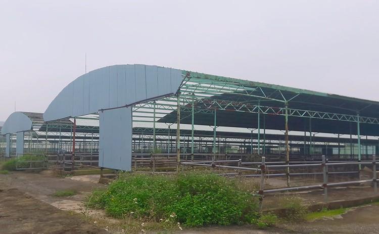 Công nhân đề xuất 'bán chuối trừ lương' ở dự án nuôi bò Bình Hà ảnh 3