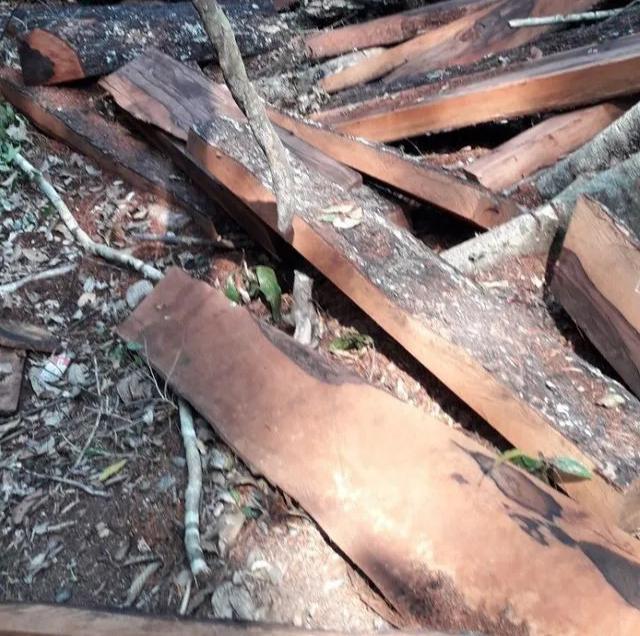 Vụ phá rừng di sản tại Quảng Bình: Bắt tạm giam nguyên trạm trưởng kiểm lâm ảnh 2