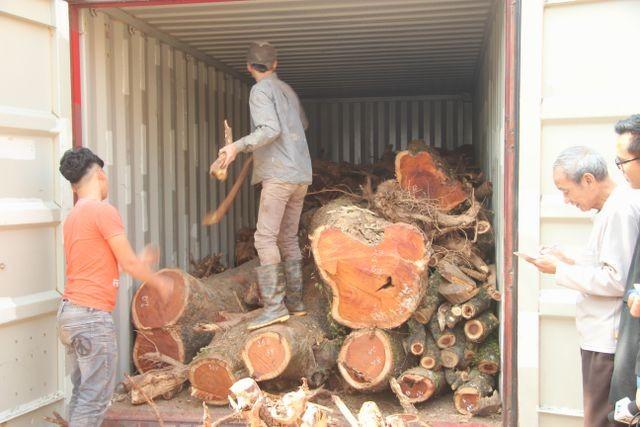 """Hà Nội: Vì sao lô gỗ sưa """"trăm tỷ"""" bị ế, bán đấu giá liên tục thất bại? ảnh 2"""