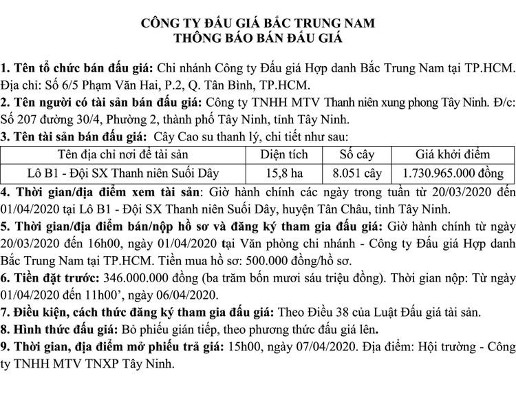 Ngày 7/4/2020, đấu giá 8.051 cây cao su thanh lý tại tỉnh Tây Ninh ảnh 1