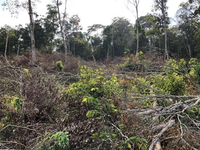 Đắk Nông: 3 đối tượng hủy hoại gần 10.000 m2 rừng ảnh 1