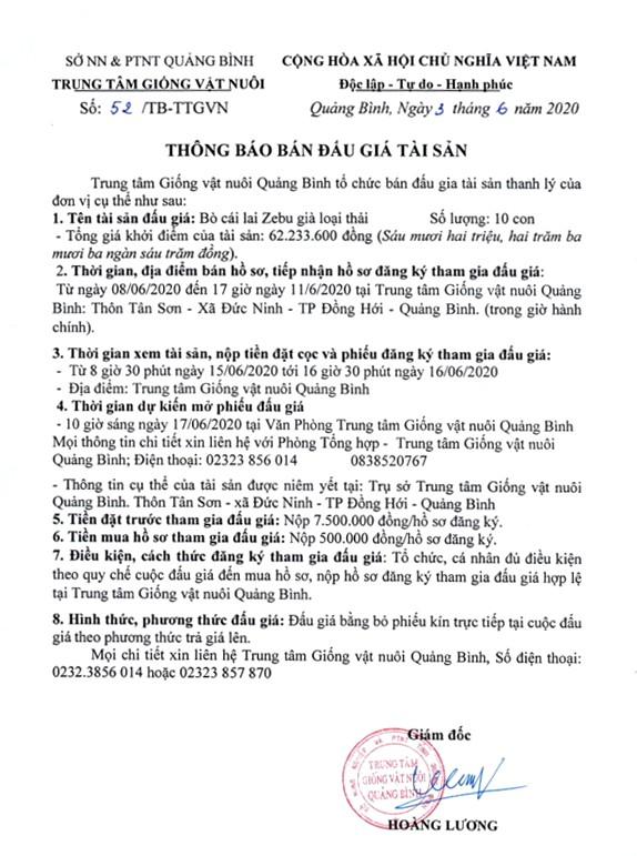 Ngày 17/6/2020, đấu giá bò cái lai Zebu tại tỉnh Quảng Bình ảnh 1
