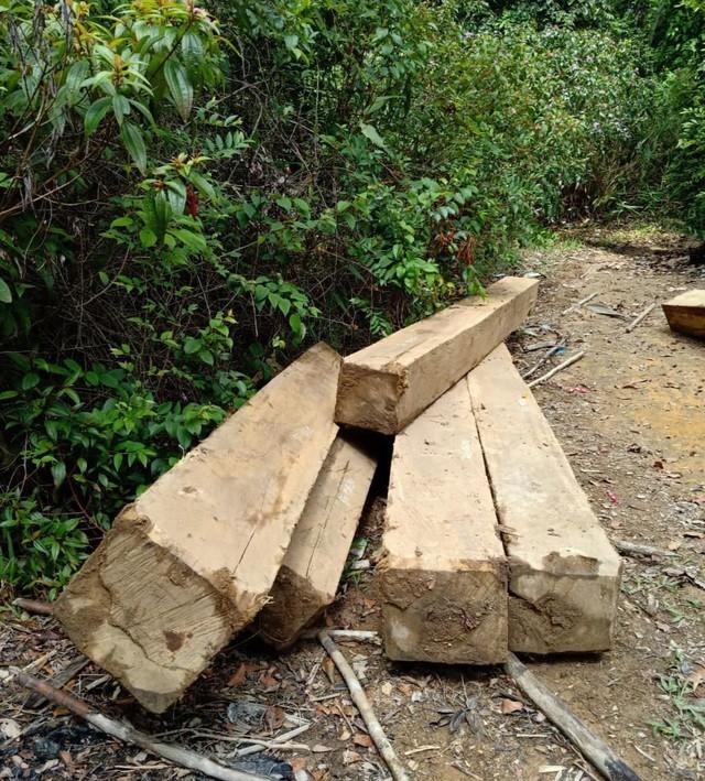 Đắk Lắk: Vận chuyển gỗ từ rừng nguyên sinh, nhóm lâm tặc bị bắt tại trận ảnh 1