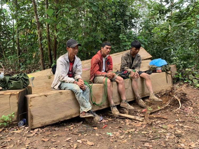 Đắk Lắk: Vận chuyển gỗ từ rừng nguyên sinh, nhóm lâm tặc bị bắt tại trận ảnh 2