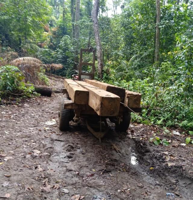 Đắk Lắk: Vận chuyển gỗ từ rừng nguyên sinh, nhóm lâm tặc bị bắt tại trận ảnh 3