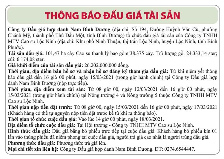 Ngày 18/3/2021, đấu giá 38.375 cây cao su thanh lý tại tỉnh Bình Phước ảnh 1